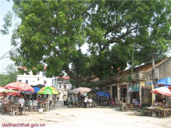 Ảnh phong cảnh quê hương xã Hương Ngải