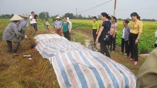 Thạch Thất tổ chức thực hành về sử dụng chế phẩm vi sinh AT- YTB trong việc xử lý rơm rạ trồng cây vụ đông