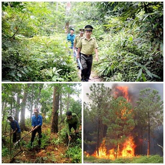 Chủ động phòng cháy, chữa cháy rừng mùa khô hanh năm 2019