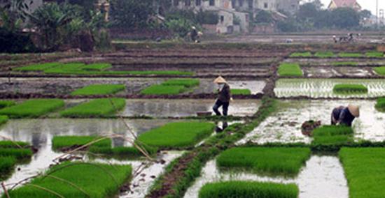 Huyện Thạch Thất: Tăng cường chỉ đạo sản xuất vụ Xuân năm 2020