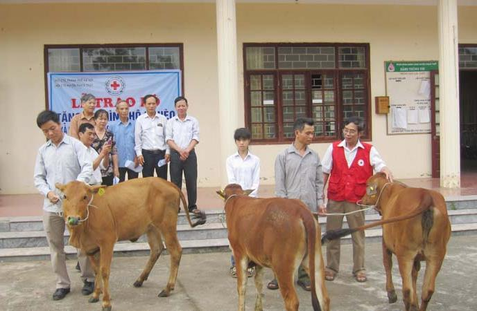 Trao bò tặng gia đình hộ nghèo.