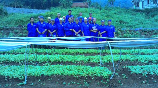 Hiệu quả từ áp dụng tiến bộ kỹ thuật trong sản xuất rau hữu cơ tại xã Yên Bình- huyện Thạch Thất