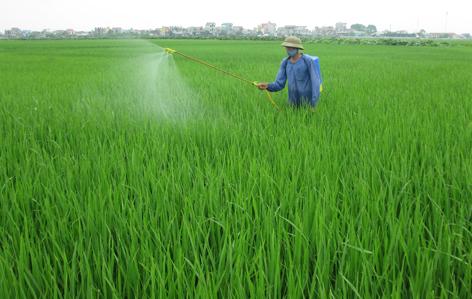 Huyện Thạch Thất phòng trừ sâu bệnh lúa mùa.