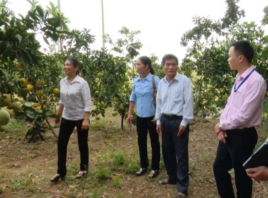 Công tác tín dụng chính sách trên địa bàn huyện Thạch Thất
