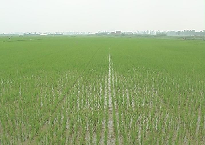 Huyện Thạch Thất tiếp tục phát triển sản xuất nông nghiệp hiệu quả bền vững