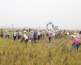 Xã Hương Ngải, huyện Thạch Thất khởi công đào đắp giao thông nội đồng thực hiện dồn điền đổi thửa.