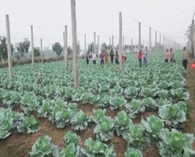 Hội nghị đầu bờ mô hình luân canh cây trồng tại xã Hương Ngải