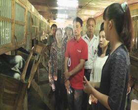 Nông dân 3 xã Miền núi huyện Thạch Thất học tập trao đổi kinh nghiệm nuôi dê tại trung tâm nghiên cứu dê và cừu Sơn Tây