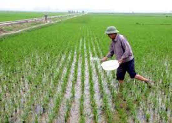 Xã Hạ Bằng tập huấn kỹ thuật chăm sóc lúa vụ xuân cho bà con xã viên