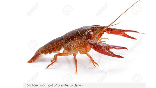 Tăng cường kiểm soát loài tôm có trong danh mục loài ngoại lai xâm hại, loài ngoại lai có nguy cơ xâm hại trên địa bàn huyện