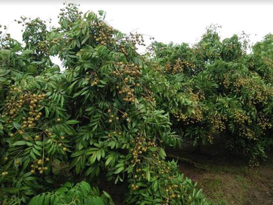 Nông dân Nguyễn Vĩnh Cường-  chuyển đổi mô hình sản xuất nông nghiệp có hiệu quả