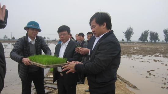 Lãnh đạo huyện đi kiểm tra tình hình sản xuất đầu xuân Bính Thân trên địa bàn huyện Thạch Thất