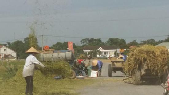Ngăn chặn và xử lý nghiêm tình trạng tuốt lúa, phơi rơm, đốt rơm rạ trên các tuyến đường giao thông