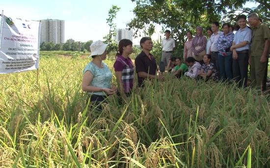Tổng kết lớp huấn luyện về quản lý dịch hại tổng hợp trên cây lúa vụ xuân năm 2019 tại xã Đại Đồng