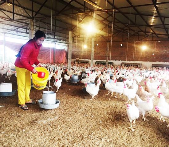 Chủ động tăng cường phòng, chống đói, rét, dịch bệnh cho đàn vật nuôi, thủy sản trong vụ Đông Xuân năm 2020 - 2021