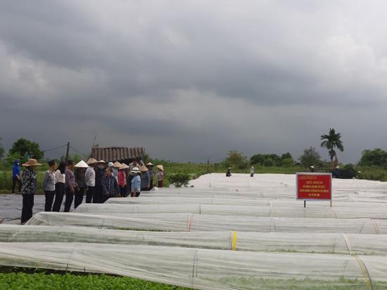 Hội nghị đầu bờ mô hình màng phủ paslite tại xã Dị Nậu
