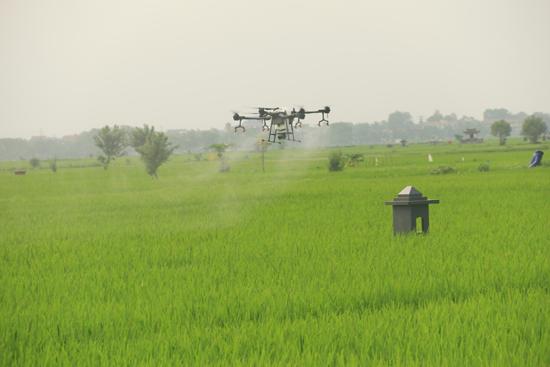 Trình diễn sử dụng phun thuốc trừ sâu bệnh bằng máy bay không người lái tại Hương Ngải