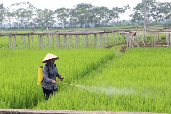 Tăng cường tập trung chỉ đạo phòng trừ sâu bệnh hại lúa vụ mùa 2020