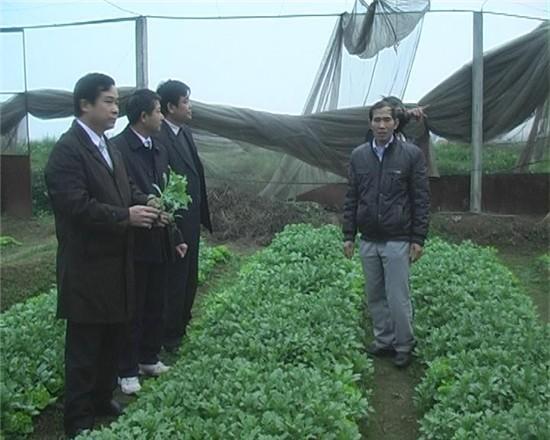 Mô hình ứng dụng khoa học công nghệ của huyện Thạch Thất.