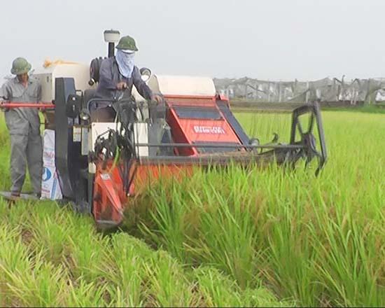 Mô hình khảo nghiệm các giống lúa mới trong vụ mùa 2013 ở huyện Thạch Thất.